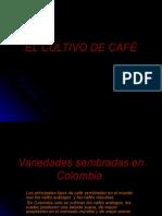 El Cultivo de CafÉ