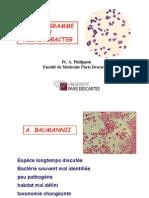 ANTIBIOGRAMME et acinetobacter