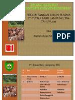 Perkembangan Plasma Program Revitalisasi Perkebunan di PT. Tunas Baru Lampung, Tbk
