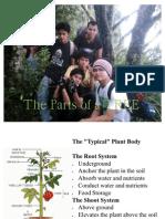 Anatomical Proerties of Tree Parts