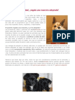 Los 10 perros que más urgencia tienen de ser adoptados