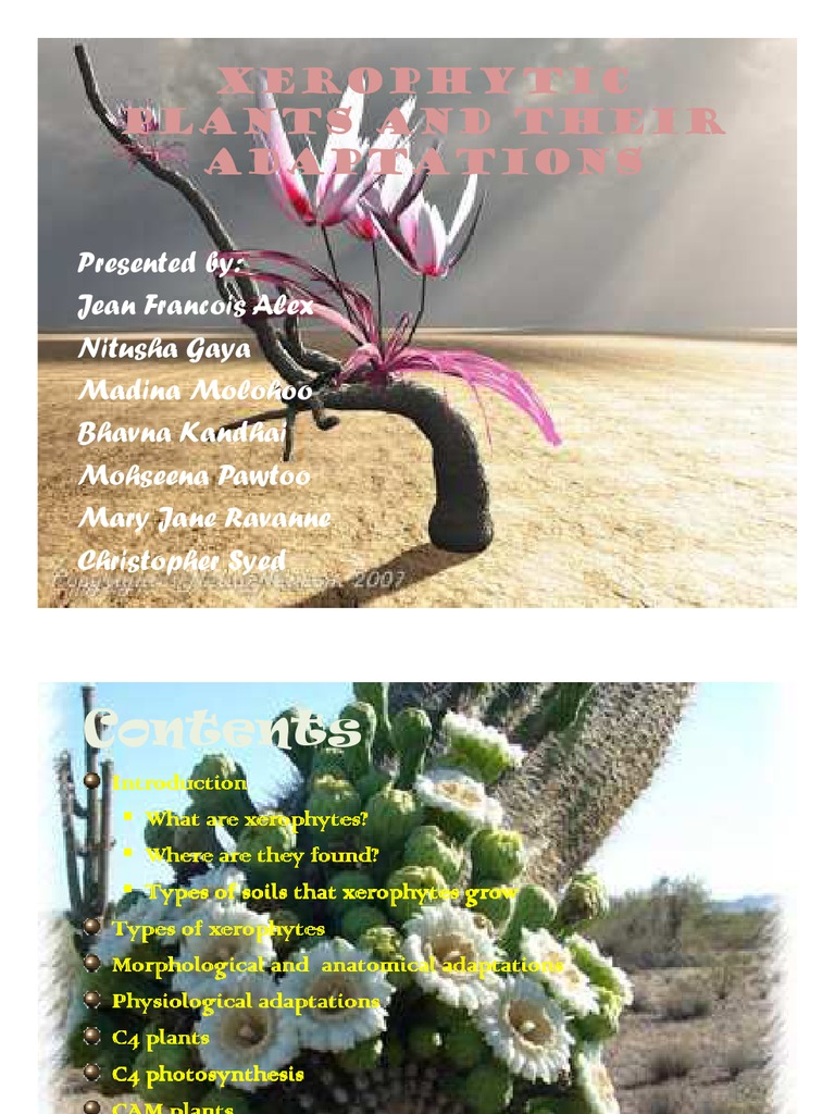 Xerophytic Plants And Their Adaptations Photosynthesis Pyruvic Acid