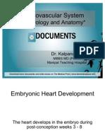 CVS- Embrology and Anatomy