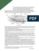 Fish Tilapia 1