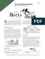 Easy Gardening - Beets