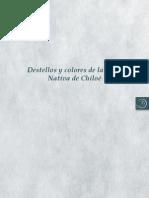 Destellos y colores de la papa nativa de Chiloé.