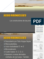 acidoribonucleico