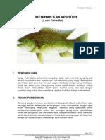 Pembenihan Ikan Kakap Putih