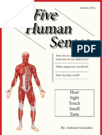 The Five Human Senses