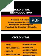 Ciclo Vital Reproductivo
