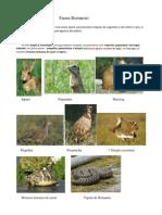 Fauna Romaniei Biologie