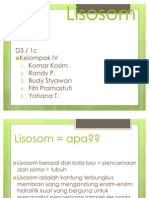 Lisosom - Copy