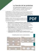 Estructura y Funcion de Las Proteínas ((RESUMEN))
