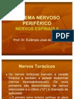 NeuroanatomianervosII