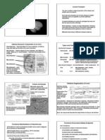Michael J. Hooper and Andrea Kirk- Neurotoxicology II