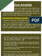 Phylum Annelida 4