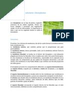 cloroplastos1