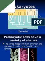 Prokaryotes Protists and Fungi
