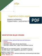 3. vegetativni biljni organi.