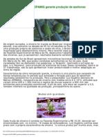 Produção de Azeitonas (EPAMIG)