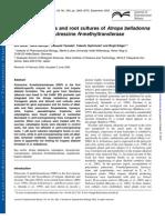 Grit Rothe et al- Alkaloids in plants and root cultures of Atropa belladonna overexpressing putrescine N-methyltransferase