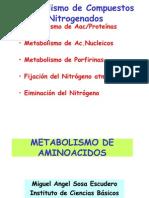 Metabolismo de AAc 1ra Parte
