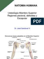 Miembro superior - OSTEOLOGÍA Y HOMBRO
