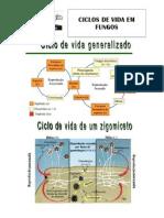 Ciclos Reprodutivos de Fungos