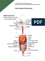 anatomi saluran pencernaan