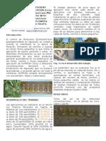 Articulo-Boletin de Dutrion en Aguacate