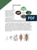 Metamorfosis de Los Insectos