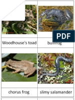 WTN Amphibians