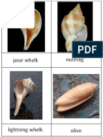 Shell Collection Cards