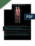 Human Anatomy Cum