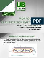 1.4 Morfologia y Clasificacion Bacteriana