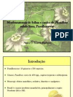 Morfoanatomia de folhas e caules de Passiflora edulis