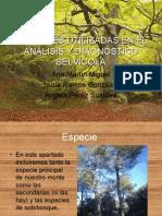 Variables Utilizadas en El AnÁlisis y DiagnÓstico SelvÍcola