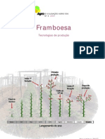 3__framboesa__tecnologias_de_producao
