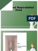 anatomi reproduksi pria