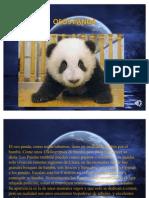 Ositos Pandas