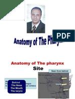 4th Year Anatomy of Pharynx