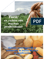 Uso de la harina de yuca en panadería