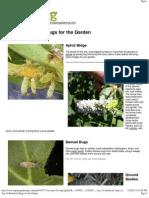 Top 10 Beneficial Bugs for the Garden