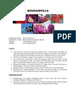 Bougainvilla(Nyctaginaceae)