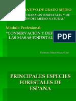 Copia de Principales Especies Forestales de Espaa Angiospermas