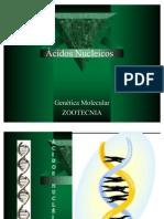 aula acidos nucleicos