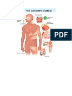 Endocrine System Introduction