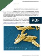 Mycobacterium Tuberculosis and Tuberculosis - Todar