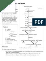 Pentose Phosphate Pathway -NADPH NADPH NADPH Wikipedia, The Free Encyclopedia
