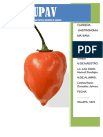 Tecnologia de Produccion Del Chile Habanero[1]